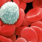 white-red-blood-cells (1)