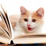 cat-reading-shutterstock_97889852